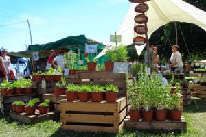 festival-terre-stand-verdure