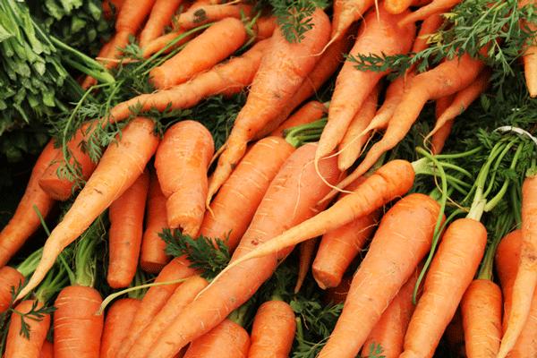 carottes-marche